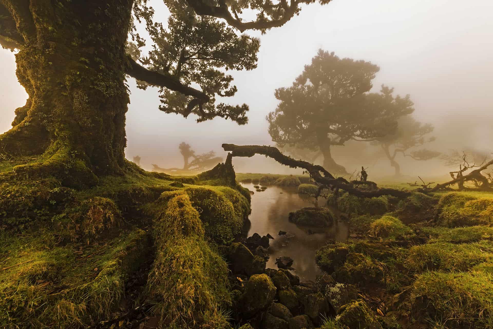 Madeira fotótúra